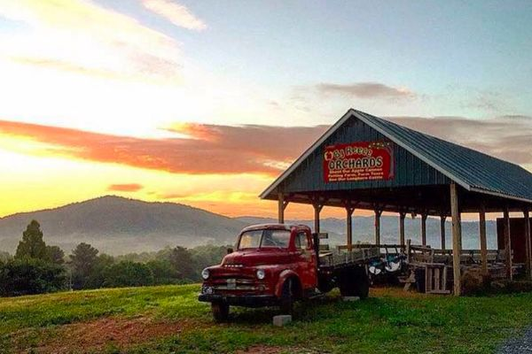 B.J. Reece Orchards with red classic car